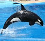 pixwords italiano ORCA